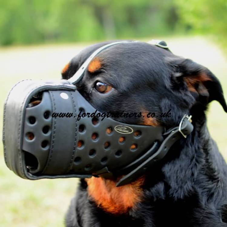 Brilliant Rottweiler With Mask And Beautiful Background