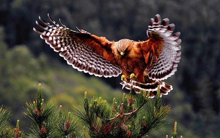 Brown Eagle Flying ON Plants Looks Great