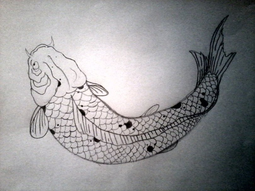 Charming Koi Fish Tattoo Drawing For Girls