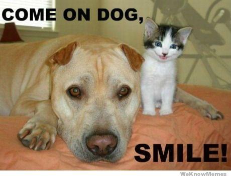 Come on Dog Smile