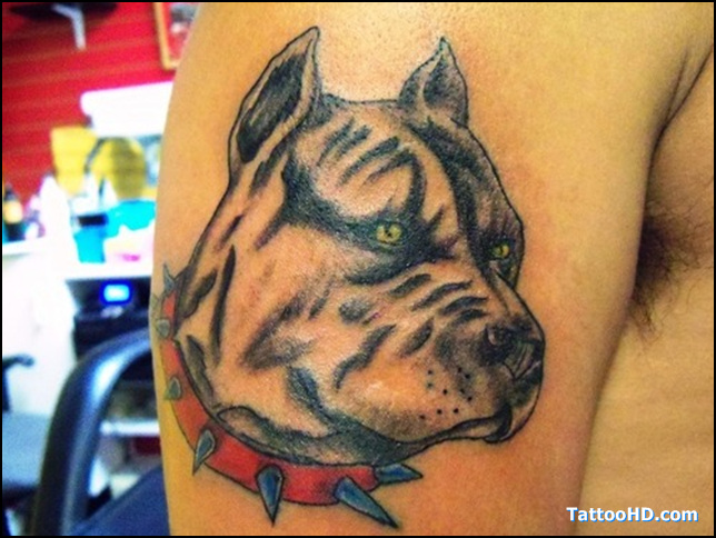 Groovy Bull Dog Head Tattoo On Biceps For Boys