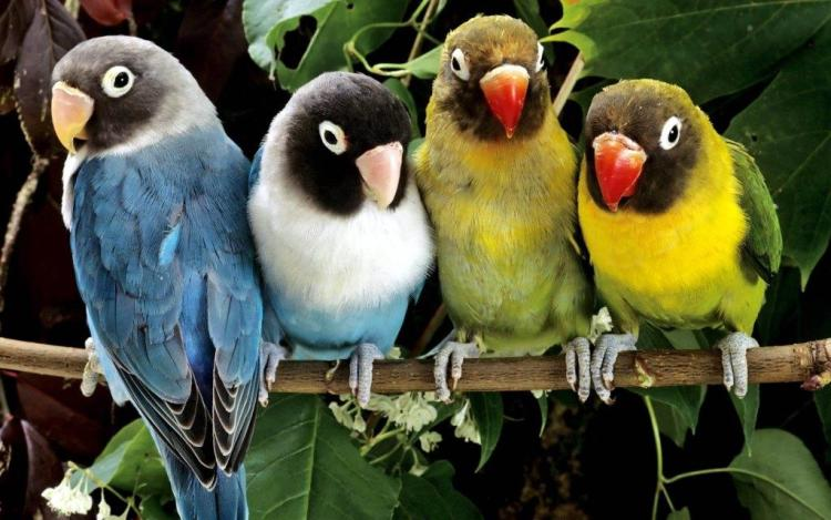 Group Of Parrots Siting Together