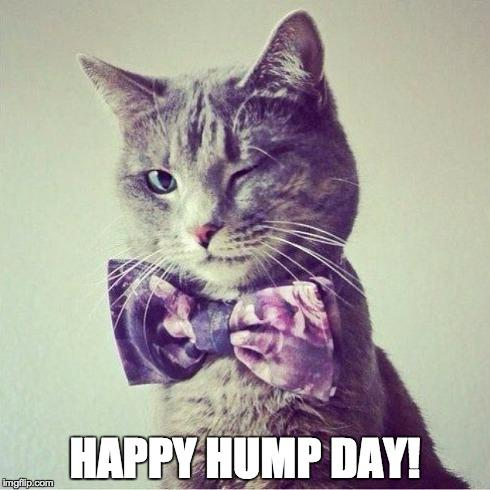 Happy Hump Day Meme Photo (3)