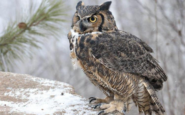 Incredible Owl Wallpaper In Brown Color