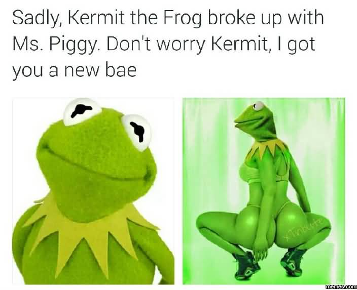 Meme Saly Kermit The Frog Broke Up With Ms Piggy Dont Worry kermit I got You A New Bae Picture