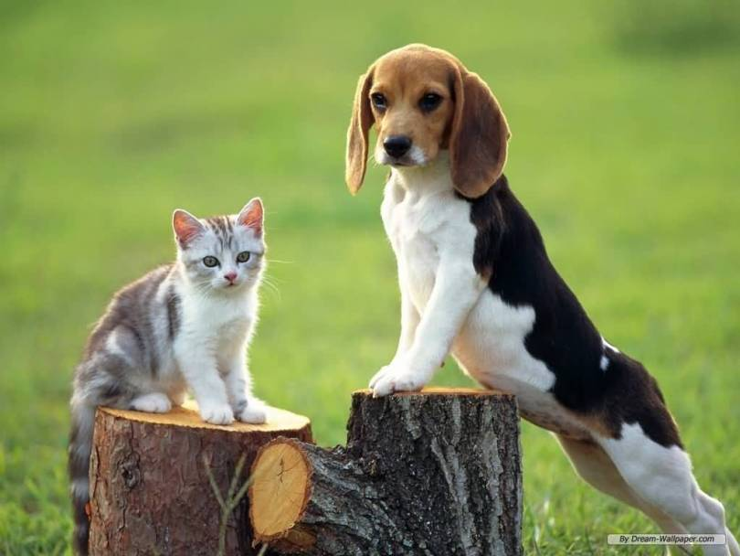 Nice Cate With Beagle Dog In Garden On Wood