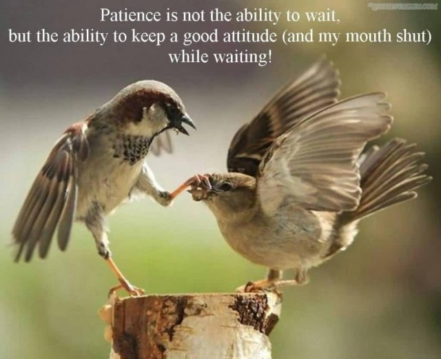 Patience Quotes patience is not he ability to wait but the
