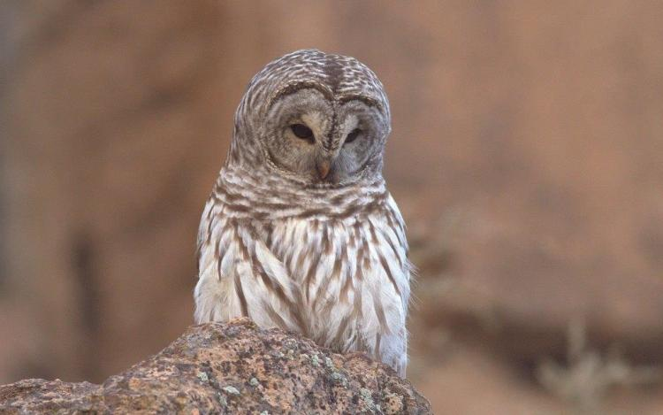 Sad Owl Looks Cute Wallpaper