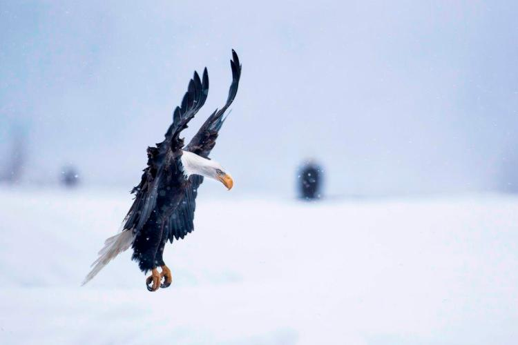 Surmounted Flying In The Snow Looks Great