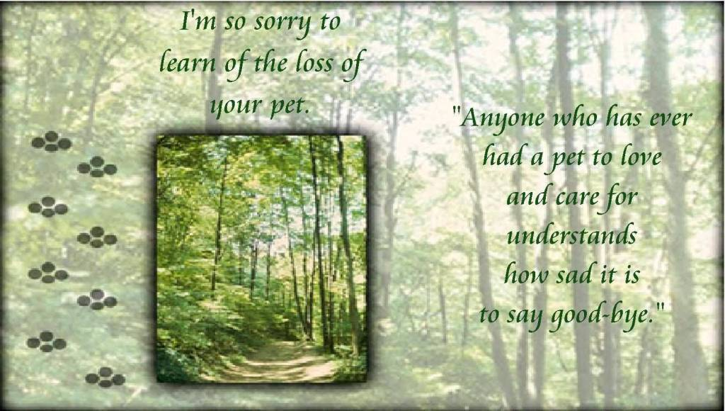 Loss Sorry Sayings Your Quotes And