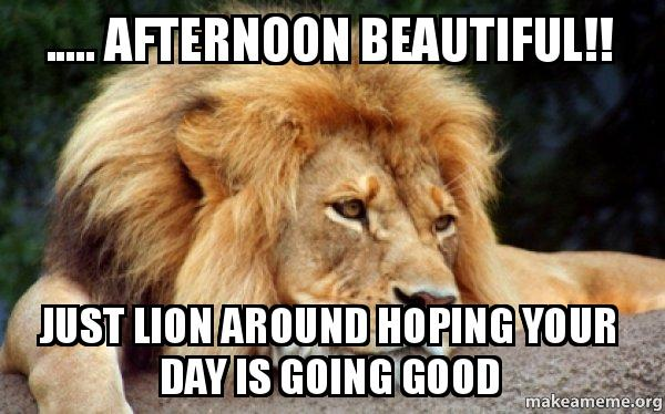 Afternoon beautiful just lion around hoping Good Afternoon Meme