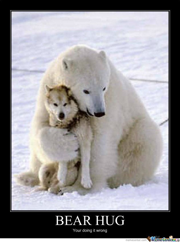 Bear hug your doing it wrong Hug Meme