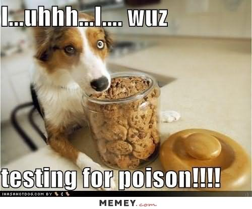Cookie Meme i uhhh i wuz testing for poison