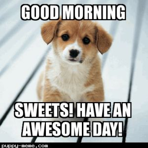 Good Morning Meme good morning sweets have an awesome day