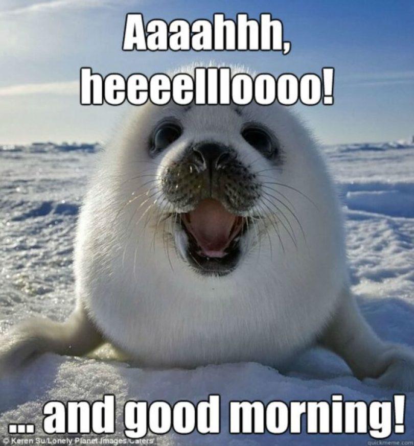 Good Morning Memes aaaaaahhh heeeeeellloooo and good morning