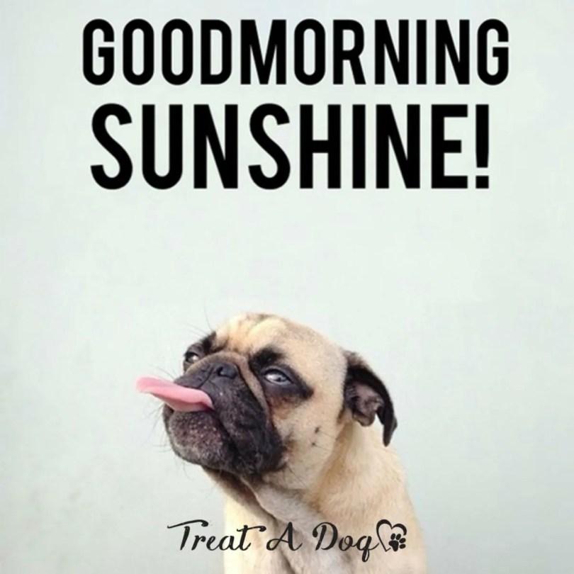 Good Morning Memes good morning sunshine
