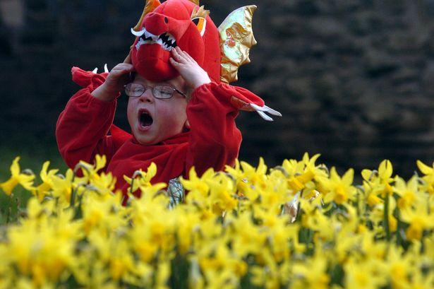 Kid Celebrate St David's Day Wishes Image