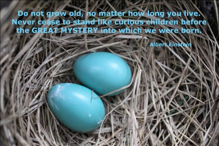 Mystery Quotes Do not grow old no matter how long you live never