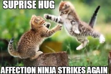 Suprise hug affection ninja strikes again Funny Hug Meme