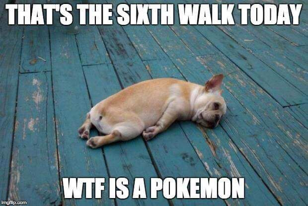 That's The Sixth Walk Today Wtf Is A Pokemon Go Meme