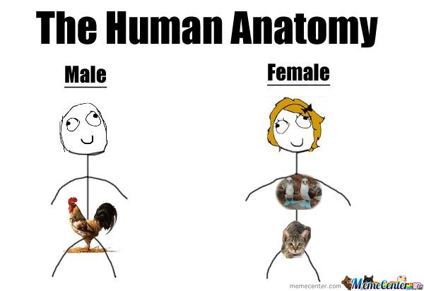 The human anatomy male female Sad Memes