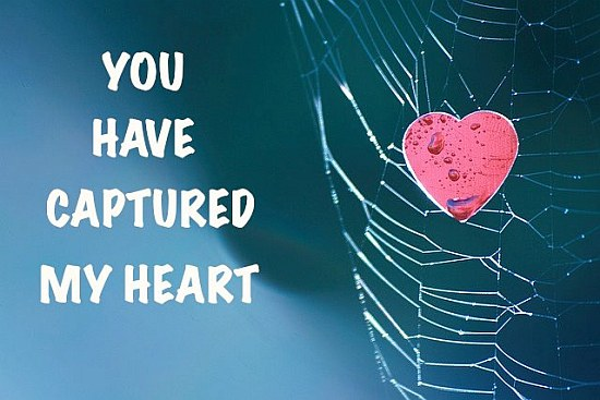 You Have My Heart Quotes you have captured my heart