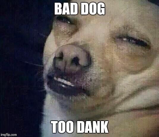 bad dog too dank meme