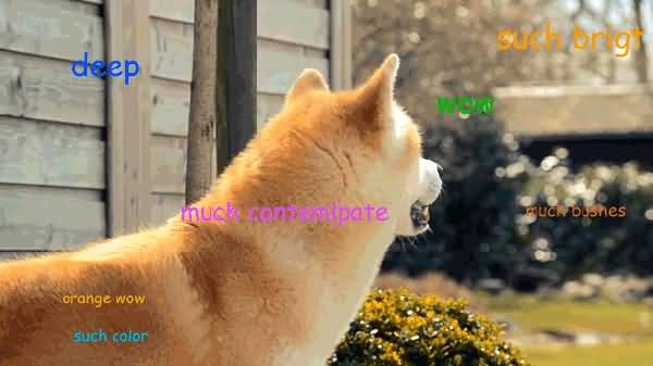 deep such bright wow much cant doge meme