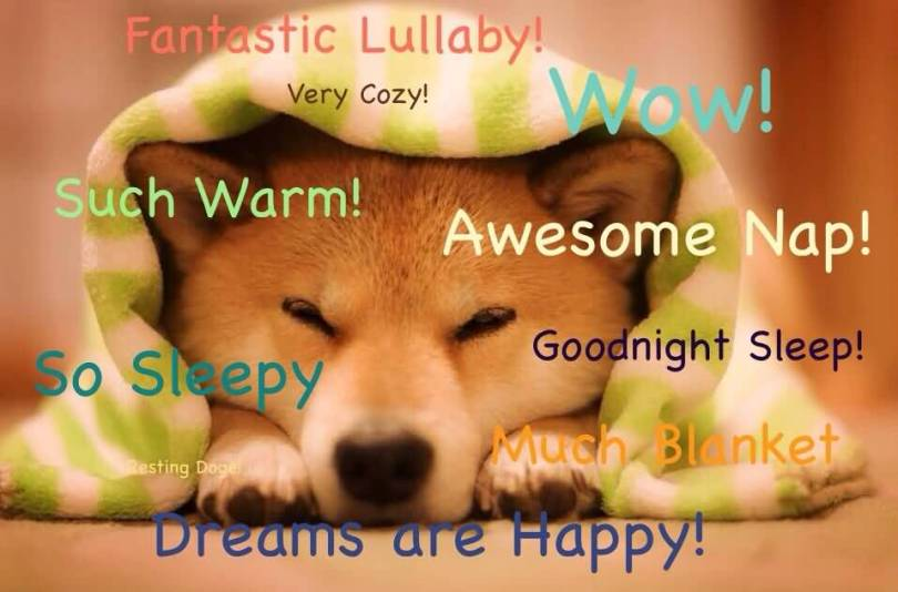 doge meme fantastic lullaby very cozy wow