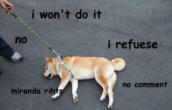 doge meme i won't do it no i refuese