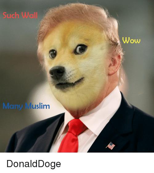 doge meme such wall wow many muslim   Picsmine