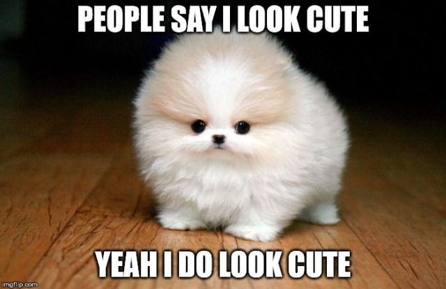 people say i look cute yeah i do look cute doge meme