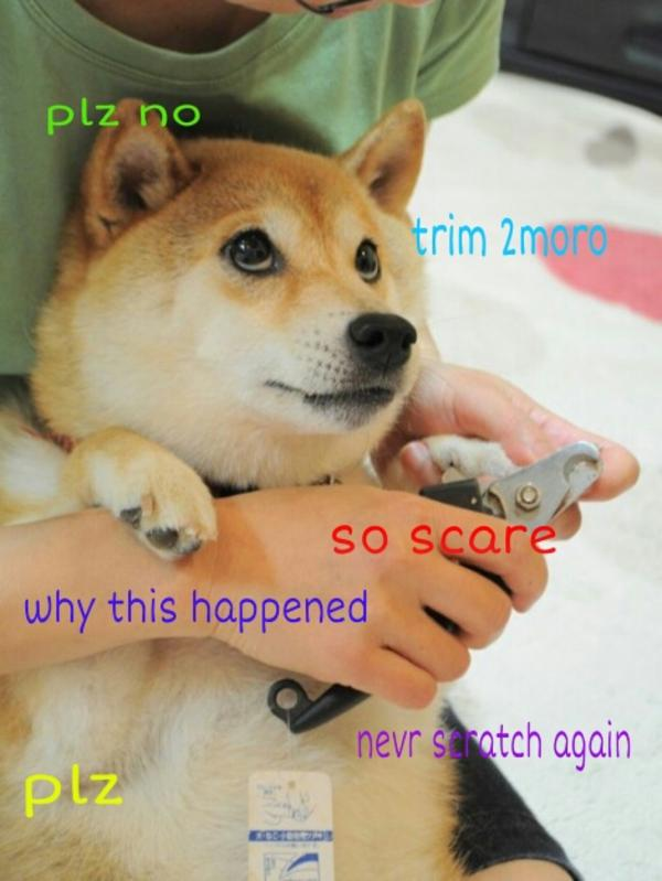 plz no trim 2 moro so scare doge meme