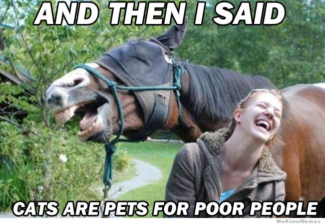 And then i said cats are pets Horse Meme