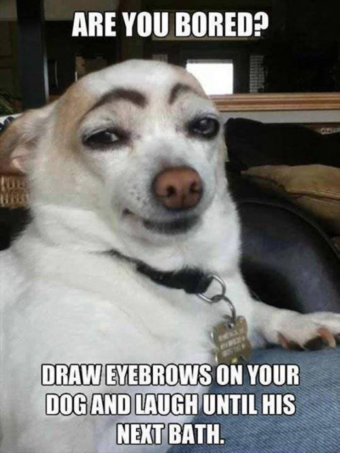 Are you bored draw eyebrows on your dog and laugh Dog Memes