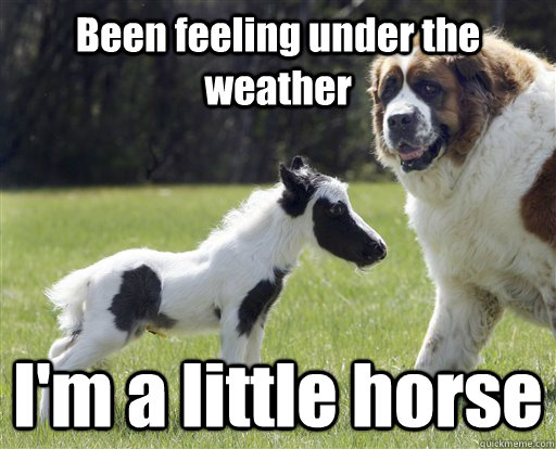 Been feeling under the weather I'm a little horse Meme