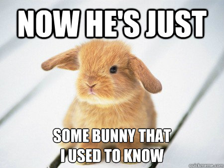 Bunnies Meme Now he's just some bunny that i used to know
