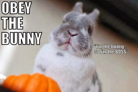 Bunnies Memes Obey the bunny I'm the bunny so I'm the boss