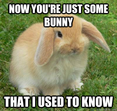 Bunnies Memes now you're just some bunny that i used to know
