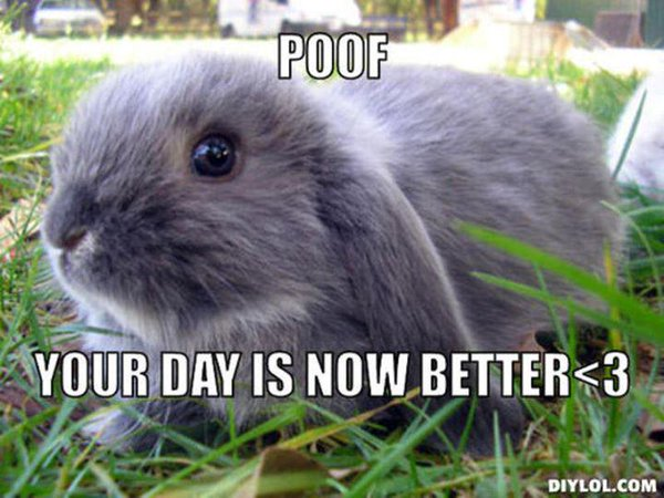 Bunnies Memes poof your day is now better