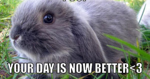 Bunnies Memes your day is now better