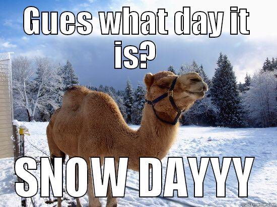 Camel Meme Guess what day it is snow dayyy