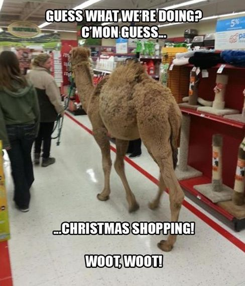 Camel Meme Guess what we re doing c'mon guess Christmas shopping woot woot