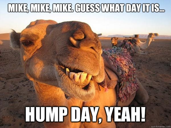 Camel Meme Mike mike mike guess what day it is hump day