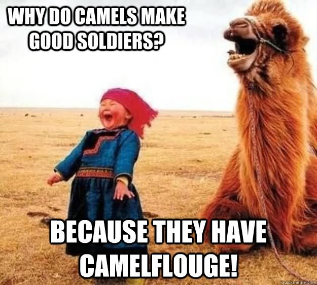 Camel Meme Who do camels make good soldieers because they have camelflouge
