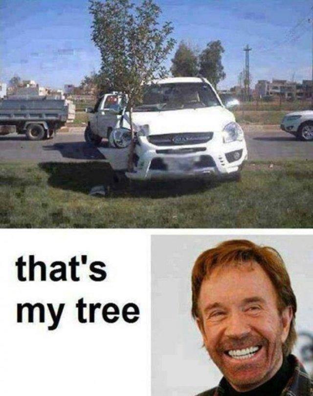 Camel Meme that's my tree