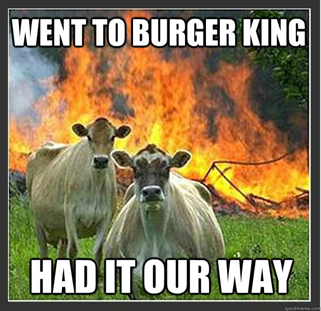Cow Meme Went to burger king