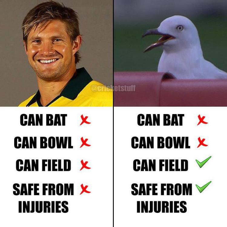 Cricket Memes Can bat can bowl can field safe from