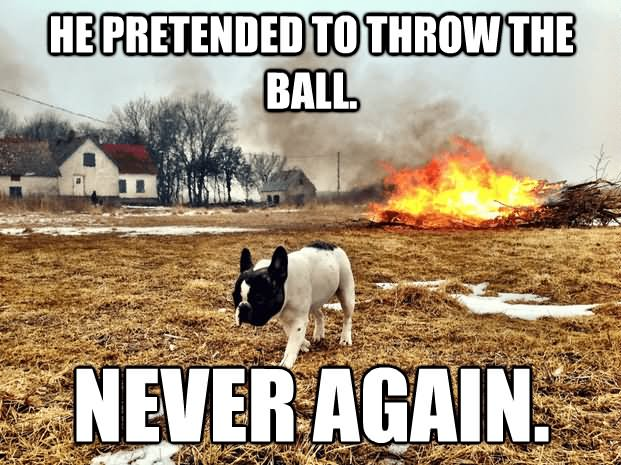 Dog Meme He pretended to throw the ball never again