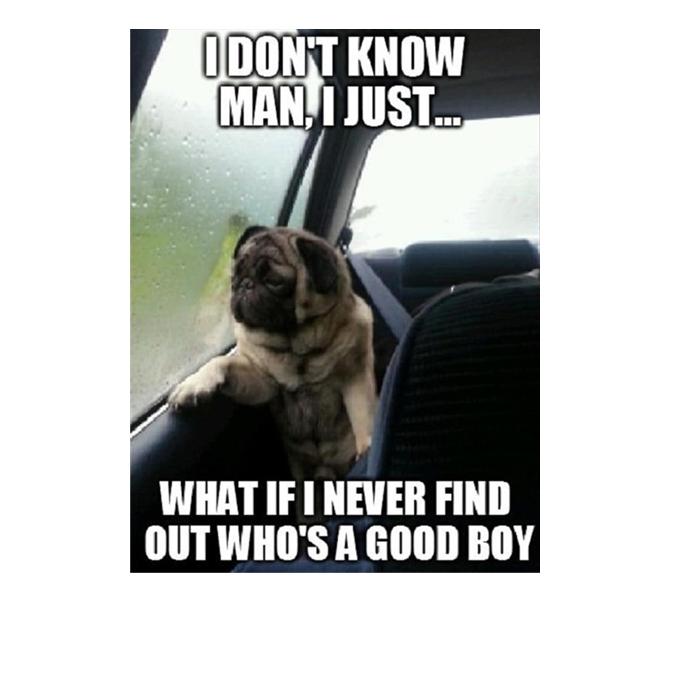 Dog Memes I don't know man i just